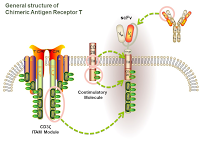 General structure of Chimeric Antigen Receptor T PPT Slide