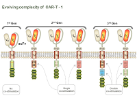 Evolving complexity of  CAR-T - 1 PPT Slide