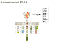 Evolving complexity of  CAR-T - 2 PPT Slide