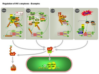 Regulation of IKK complexes - Examples PPT Slide